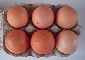 Large hen-eggs