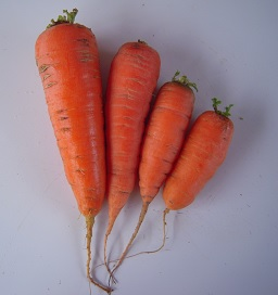 Carrots are back!
