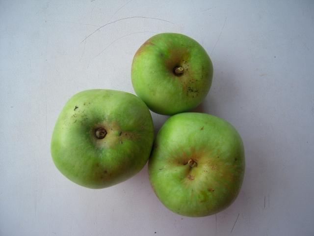 Howgate wonder eating apples