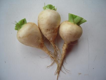 Turnip (snowball)