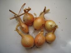 White onion - jet set
