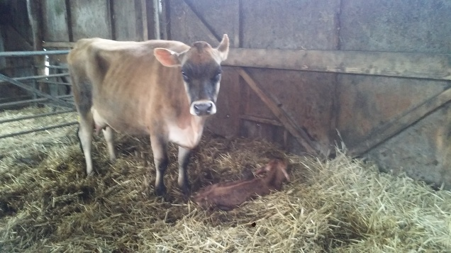 Born this morning, 17th March