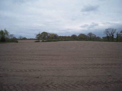 Field sown with Oats