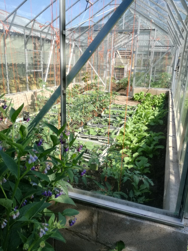 Greenhouse plants thriving.