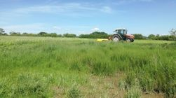 Mowing the field for making silage