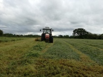 Rowing up grass for making silage