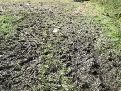 muddy field!