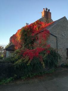 Autumn colours on the farm house