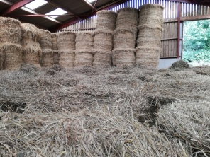 Straw for winter